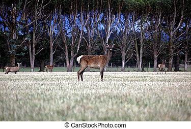 deer in a forrest