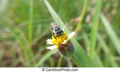 Bee swarming grass flower
