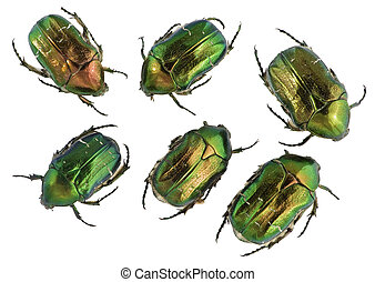 "Emerald gold bugs set - Six emerald gold bugs ""Cetonia..."