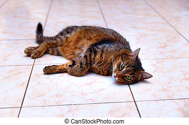 beautiful stripped cat lying down on a marmor floor Eye...