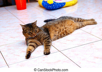 beautiful stripped cat lying down on a marmor floor. -...