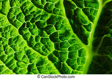fresh savoy cabbage leaf - savoy cabbage leaf macro as a...