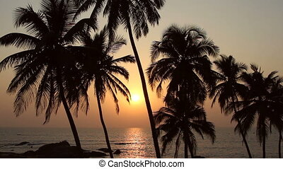 Five Palm Trees Silhouette At Sunset - Palm Trees Silhouette...