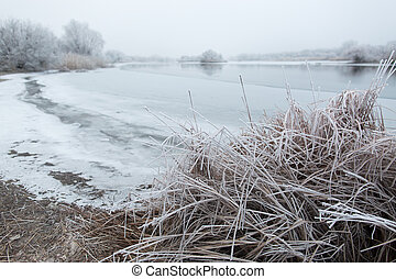 frost on the reeds - Morning frost on the reeds near the...