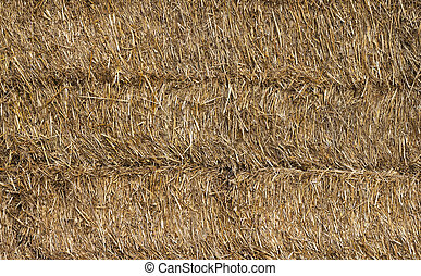 Texture of dry straw Background