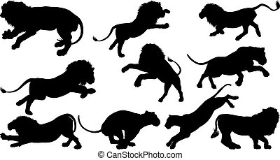 Lion Silhouettes - Silhouette Lions. A set of male and...