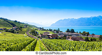 Vineyards in Lavaux region - Terrasses de Lavaux terraces,...