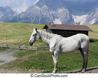 Single horse in an alpine pasture with Sesto Dolomites,...
