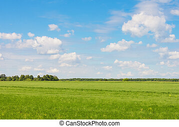 Field against the sky with clouds and forests - Green field...