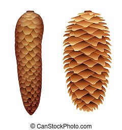 Spruce Cone Open Closed - Spruce cones - with flat closed...