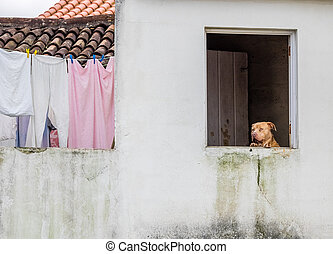 Cute dog in the window - Cute dog looking through the open...