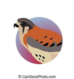 American Kestrel Flat Design Vector Illustration - American...