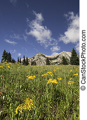 East Beckwith Mountain Flowers - East Beckwith Mountain is...