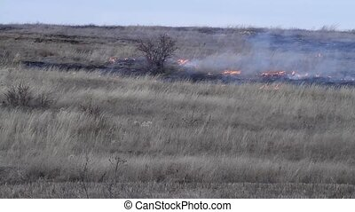 fire in the steppe