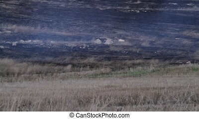 fire in the steppe - burning dry grass in the steppe