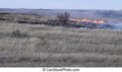 fire in the steppe - burning dry grass in the desert against...