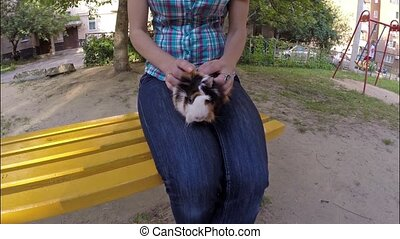 Guinea pig in hands - Guinea pig sits on a hand of a woman...