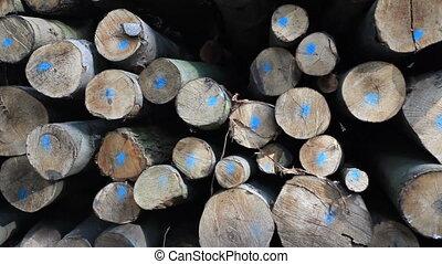pile of trunks