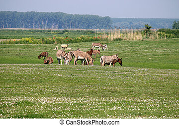 donkeys on pasture summer season