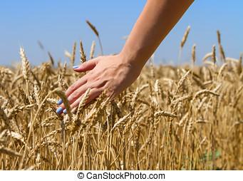 girl's hand touching wheat.