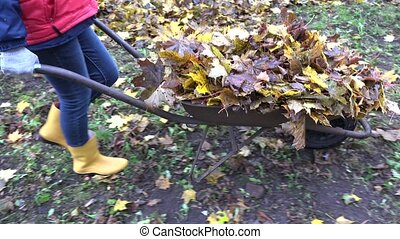 woman carry barrow cart full of leaves in autumn garden....
