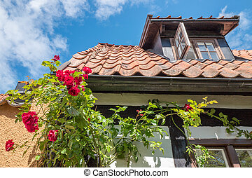 Roses in idyllic Visby, Sweden - Roses growing on a wall in...
