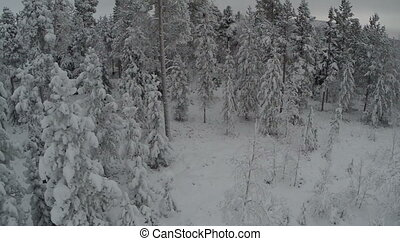 Flying over the Forest in Winter