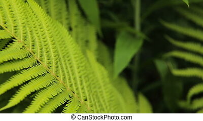 Green ferns in the forest - Beautyful ferns leaves green...