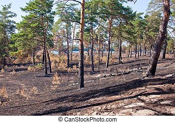 consecuencias, de, grassroots, incendio descontrolado, en,...