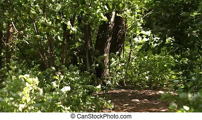 footpath In the thickets green fore - In the thickets of...