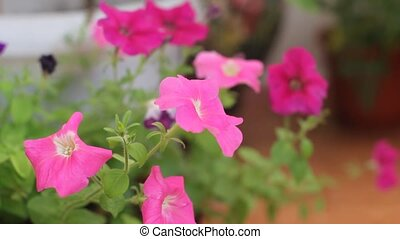 watering homemade flowers - sprayed pink home flowers...