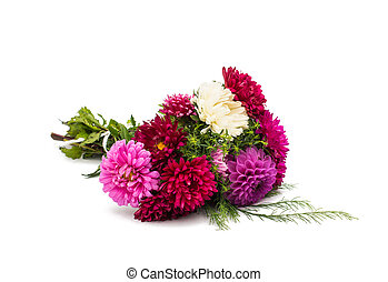 a bouquet of asters on a white background