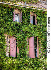 Old house with green leaves in Provence, France