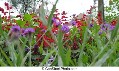 A Variety of Wildflowers. Red and Purple Wildflowers. Camera Movement Along the Beds of Flowers Gives the Opportunity to See a Variety of Colors.