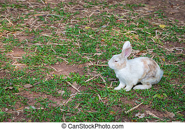 Wild rabbit on the grass nature background