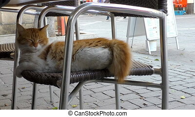 City cat on chair in the street - Sleepy white ginger cat...