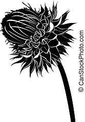 thistle. milk thistle flower in bloom in spring vector black...