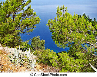 Ocean view through pine trees