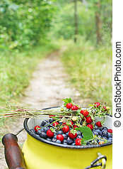 crop of bilberries and wild strawberries on the forest path...