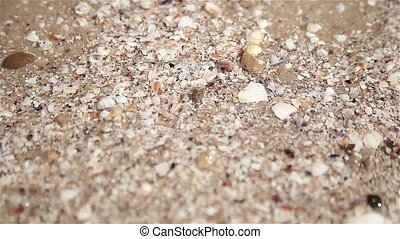 Little sea shells on sand, Sea waves on beach, Close up of...