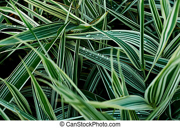 Sedge green grass close-up. Textural background - Sedge...