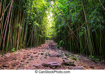 Landscape view of bamboo forest and rugged path, Maui -...