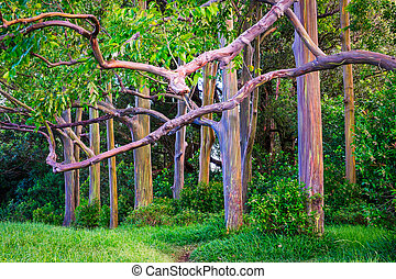 Beautiful landscape view of colorful painted eucalyptus...