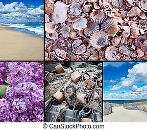 Cape Cod Collage which includes beaches, lilac, shells, and...