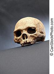 Skull On Dark