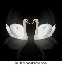 two swans - composition of two swans with reflections...