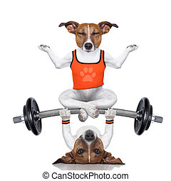 personal trainer dog and yoga dog