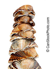 seashells - a pile of seashells isolated on a white...