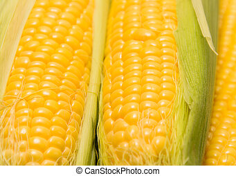 Several young corncobs - Young corn cob close up corn grain