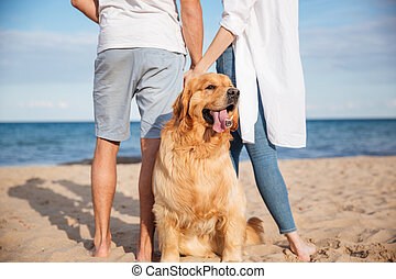 Cute dog walking with young couple on the beach - Closeup of...